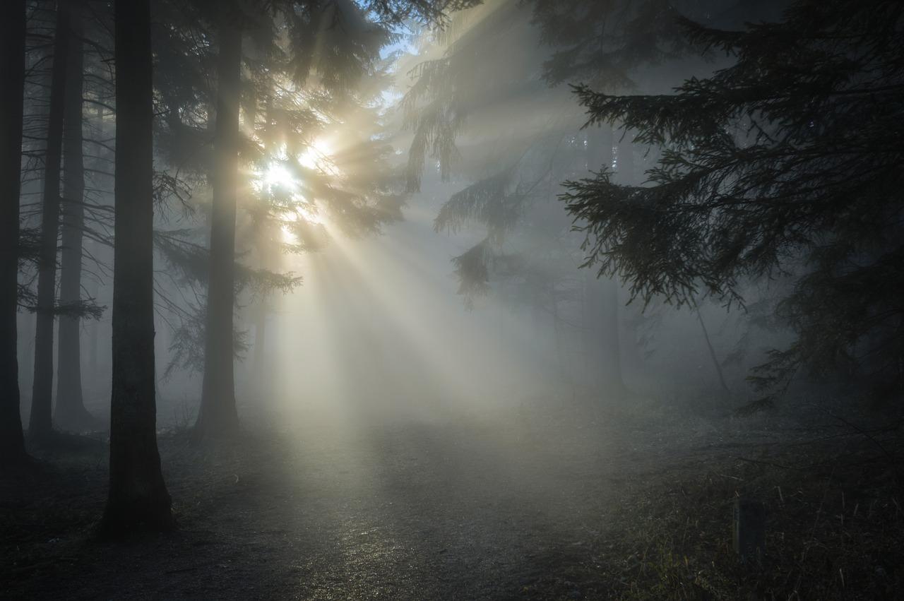 photo of winter sun