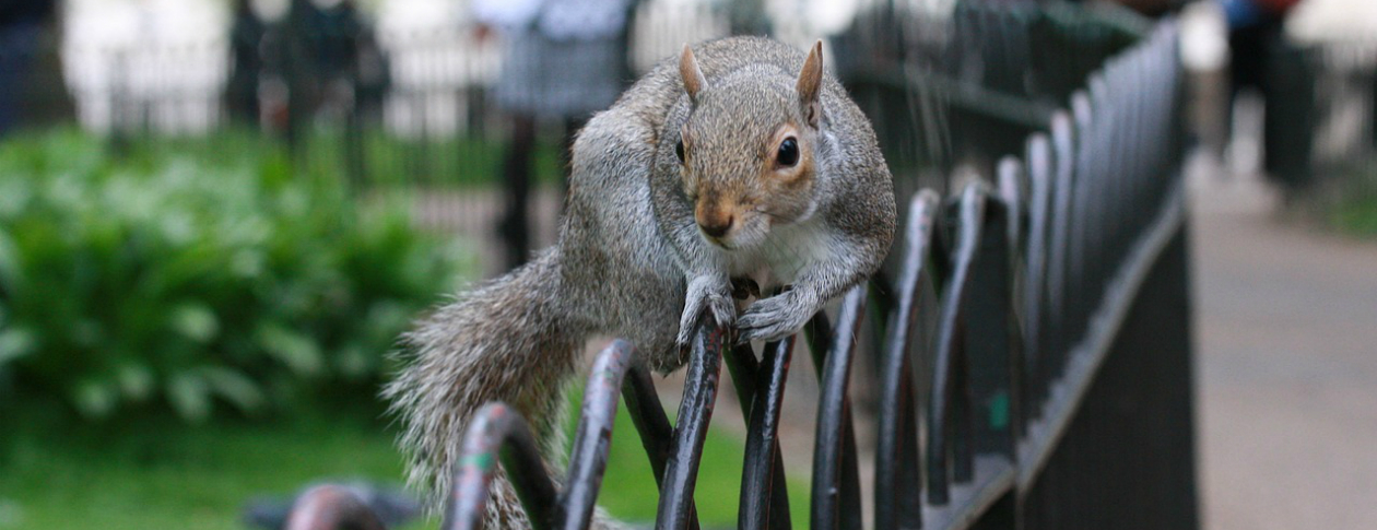 Picture of a squirrel on a fence